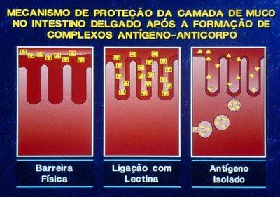 Figura 12. Ação protetora física e química da cobertura de muco sobre o epitélio intestinal.