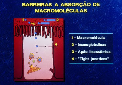 Figura 20. Representação esquemática da barreira da mucosa intestinal.