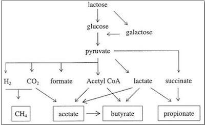 Figura 24- Produtos da metabolização da Lactose pela flora colônica.
