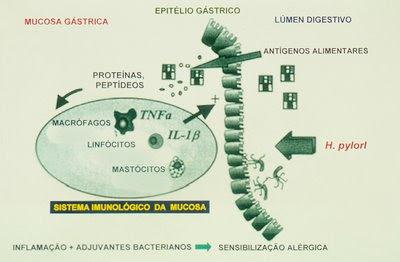 Figura 46. Esquema de proposta de provocação deAAdevido a infecção peloHelicobacter pylori.