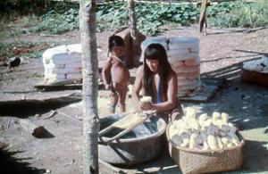 Figura 22- Índia preparando a mandioca para posterior extração do ácido cianídrico, potente veneno presente neste vegetal plantado na região do Alto Xingu.