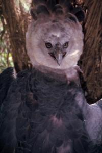 Figura 3b - Exemplo típico da fauna xinguana preservada fazendo parte integrante da própria comunidade