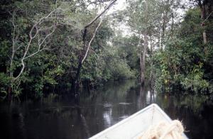 Figura 23- Navegando pelo rio Xingu e pelos atalhos do rio, para cortar caminho, durante a época das chuvas que só os índios conhecem.