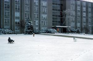 Figura 7- Uma visão do prédio onde morávamos e Uly se divertindo na neve com o seu trenó.