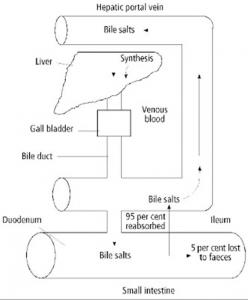 Figura 1- Representação esquemática do ciclo de produção da bile a partir do fígado, armazenamento na vesícula biliar, liberação no duodeno e respectiva reabsorção no íleo terminal.