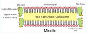 Figura 10- Representação esquemática da formação da micela.