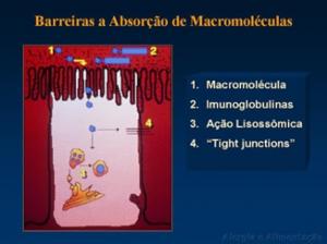 Figura 9- Desenho esquemático do processo de destruição da macromolécula pelo lisosoma e sua eliminação do enterócito por meio da exocitose, agora já sem possibilidade de desenvolver estímulo antigênico.