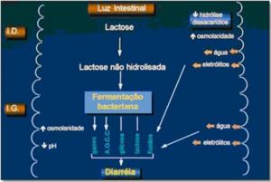 Figura 2- Esquema da diarréia osmótica provocada pela má absorção dos carboidratos da dieta.