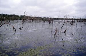 Figura 1- Época inicial das chuvas, as áreas ribeirinhas sendo invadidas.