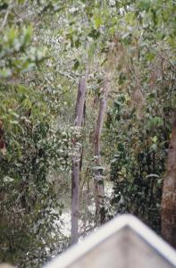 Figura 2- Época do apogeu das chuvas, as águas invadiram as matas circunvizinhas ao rio.