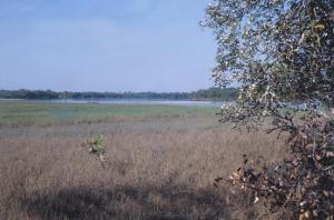 Figura 3- Época inicial do verão, as águas começam a baixar e já se vislumbra a formação das praias.