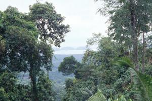 Figura 5- Vista desde a aldeia indígena de Angra dos Reis.