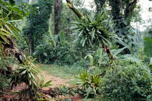 Figura 6- Um pouco da vegetação típica da Mata Atlântica.