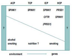 Figura 7- Ilustração diagramática dos fatores genéticos e ambientais e suas suspeitadas influências na patogênese da PC: ACP- alcoólica; TCP- tropical; ICP- idiopática; HCP- hereditária.