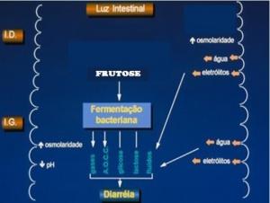 Figura 5- Representação esquemática da má absorção de frutose.