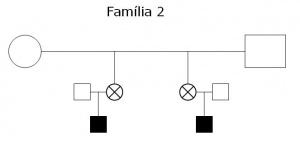 Tabela 3- Heredrograma da Família 2