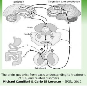 Figura 1- Representação esquemática do eixo cérebro-intestino.